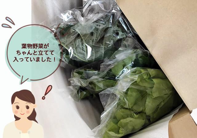 葉物野菜が、ちゃんと立てて入っていました